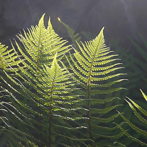 Pflanze 7
